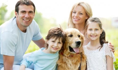Что нужно знать, перед тем, как заводить домашних питомцев в своей семье