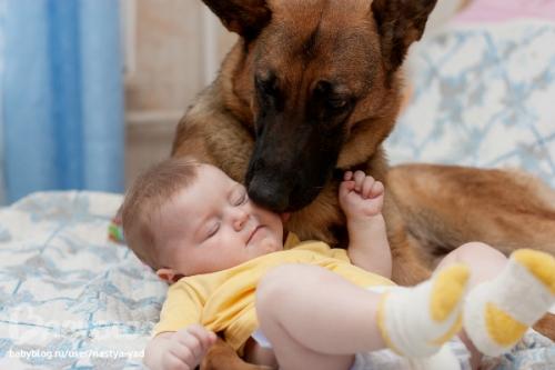 Животное в семье, возможно ли подобное, если у вас новорожденный ребенок?