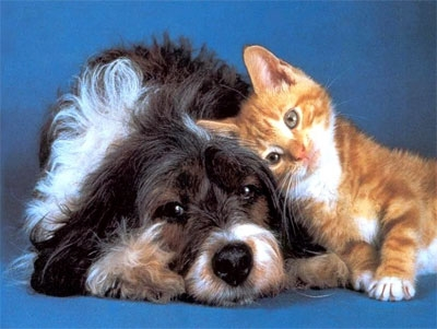 Какое животное лучше всего выбрать в качестве домашнего любимца?