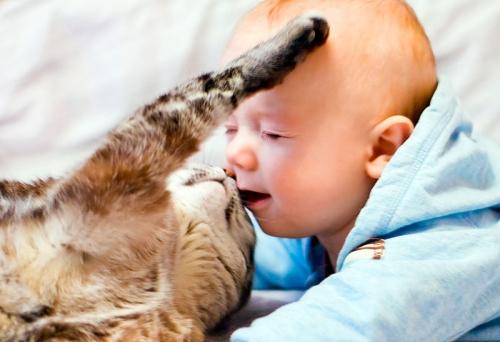 Практические советы при выборе питомца для ребенка