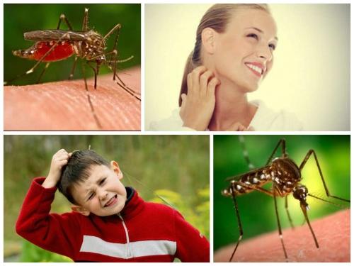 Ребенок и комары. Как защитить малыша от насекомых?