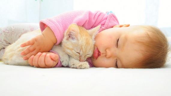 Дети и животные. Стоит ли заводить кошку?
