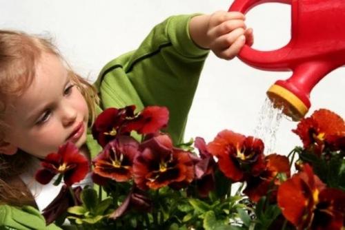Какие цветы можно ставить в доме, где есть ребенок