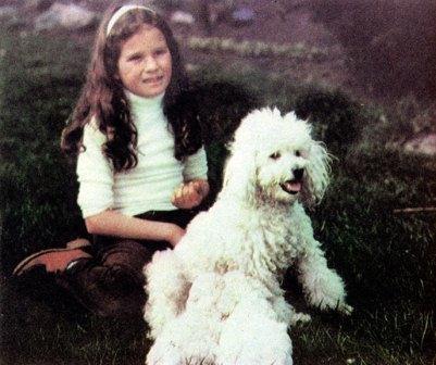 Поговорим об особой породе собак – о пуделях