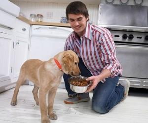 О некоторых ошибках, которые допускают хозяева, готовя корм своим домашним питомцам (собакам)